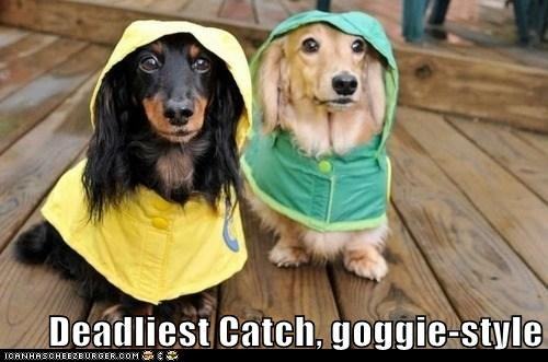 Deadliest Catch, goggie-style