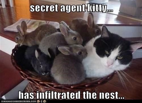 secret agent kitty...  has infiltrated the nest...