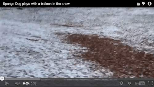 Around the Interwebz: Dog Plays Fetch With a Balloon in the Snow!