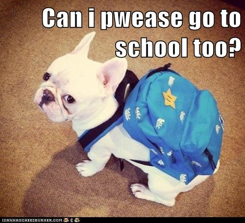 Can i pwease go to school too?