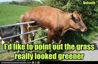 fence,stuck,cows,grass is always greener