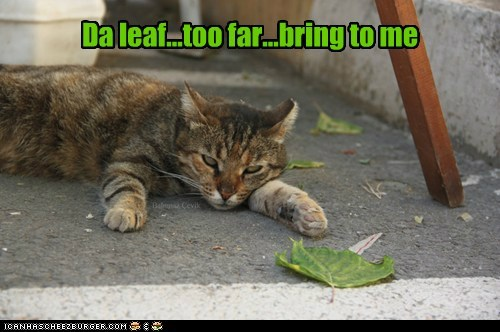 Da leaf...too far...bring to me