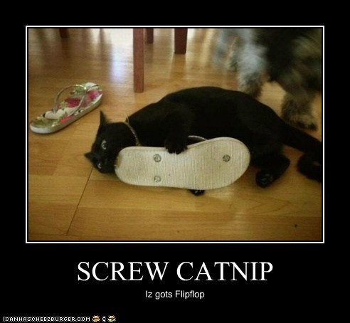 SCREW CATNIP