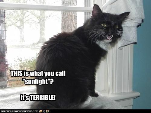 Basement Kitty doesn't like sunshine