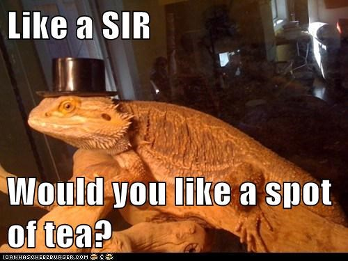 Like a SIR  Would you like a spot of tea?