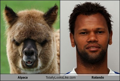 Alpaca Totally Looks Like Rolando