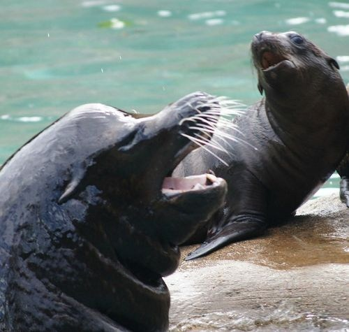 sea lions,winner,squee spree,squee