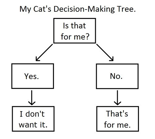 Classic: My Cat's Decision Making