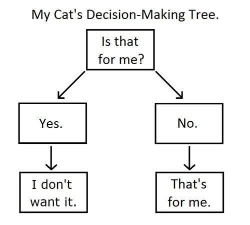 cat,flow chart