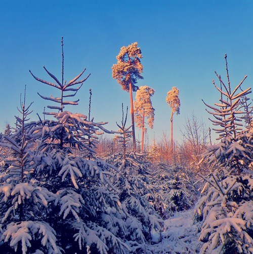 Forest,snow,winter