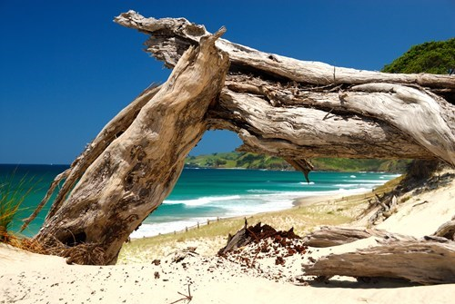new zealand,beach