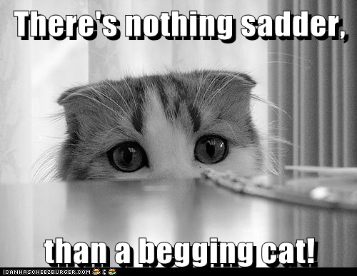 There's nothing sadder,  than a begging cat!