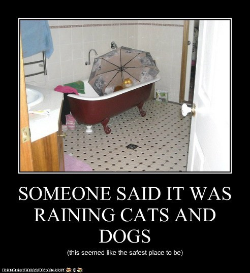 SOMEONE SAID IT WAS RAINING CATS AND DOGS