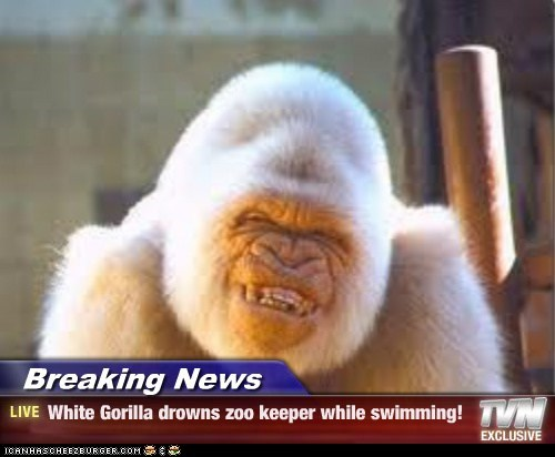 Breaking News - White Gorilla drowns zoo keeper while swimming!