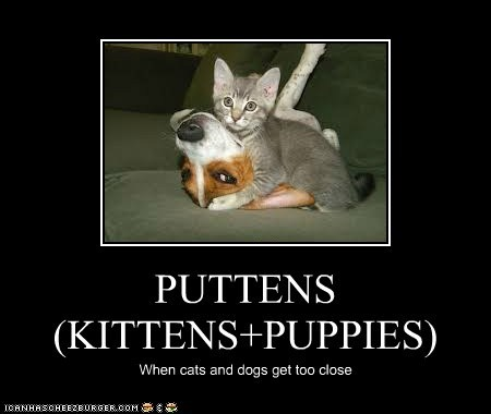 PUTTENS (KITTENS+PUPPIES)