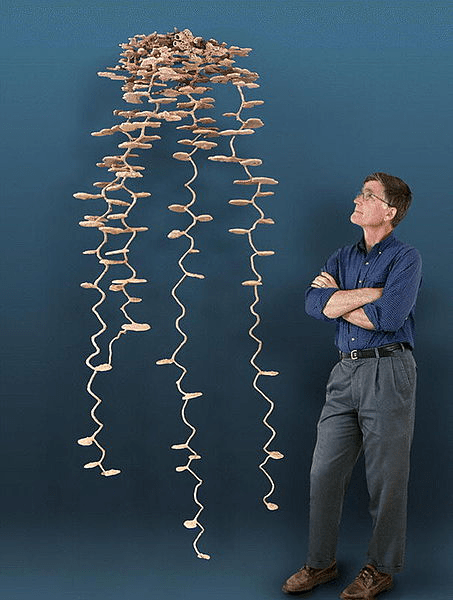 A New Perspective of the Day: This is What an Ant Colony Looks Like