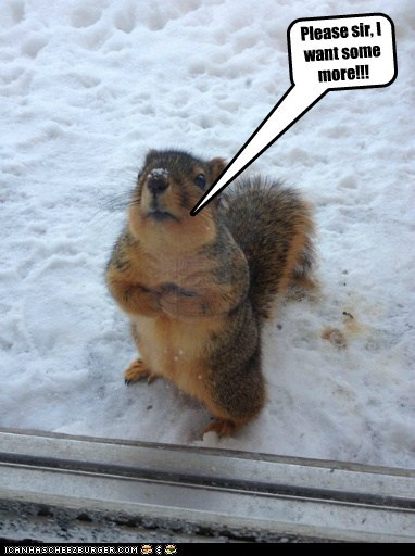 Little Oliver Twist Squirrel wants some more of that sweet, sweet gruel.
