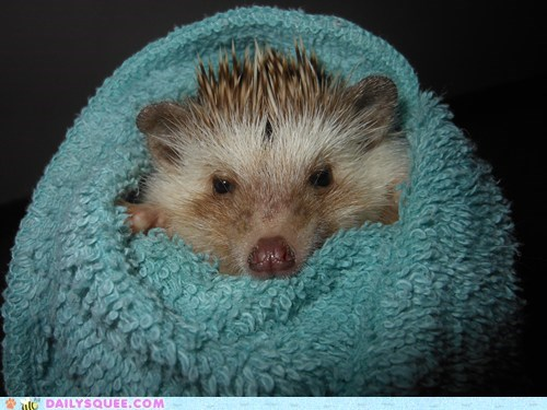 Pickles the Hedgehog