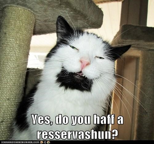 reservation,food,Cats