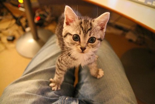 Cyoot Kitteh of teh Day: Alert and Attentive!