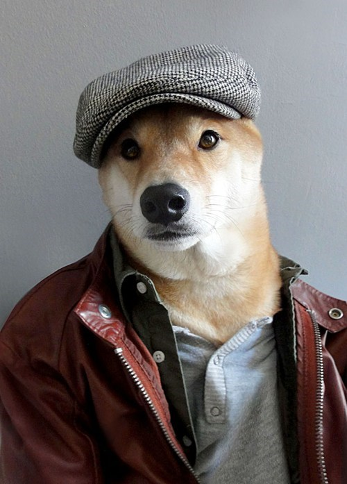 dogs,hats,jackets