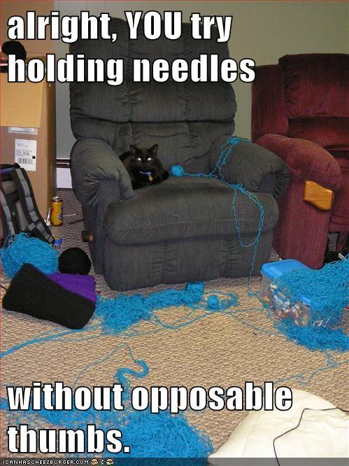 knitting,thumbs,Cats