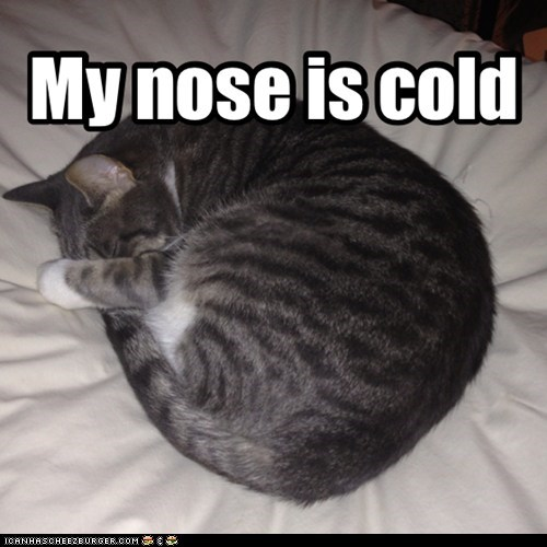 My nose is cold