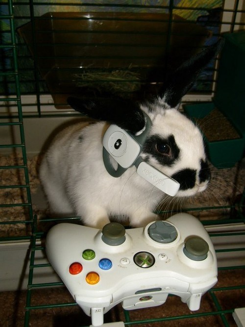 Bunday,bunnies,video games,xbox 360,squee,rabbits