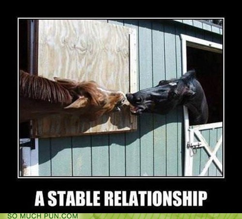 relationship,horses,double meaning,stable