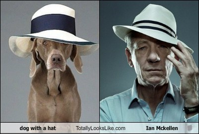dog with a hat Totally Looks Like Ian Mckellen
