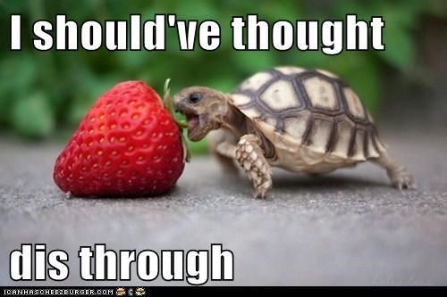 turtles,too big,should have,strawberry,eating,planning