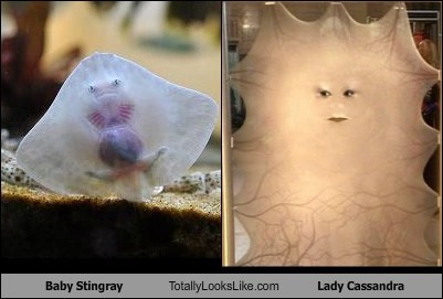 Baby Stingray Totally Looks Like Lady Cassandra