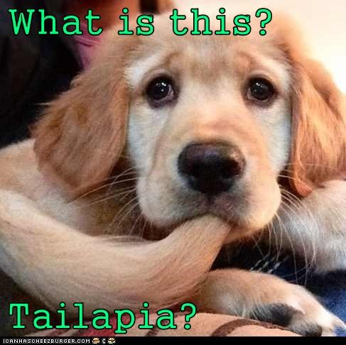 What is this?  Tailapia?