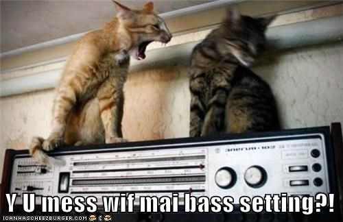 Audiophile Cat Takes His Music Seriously