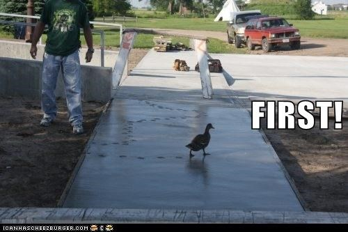 annoying,first,ducks,tracks,cement