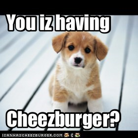 You iz having cheezburger?
