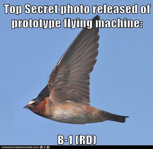 birds,prototype,flying,top secret