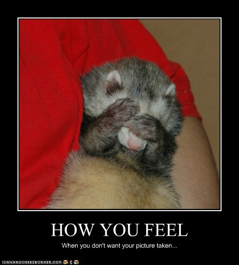 how you feel,ferrets,picture,hiding