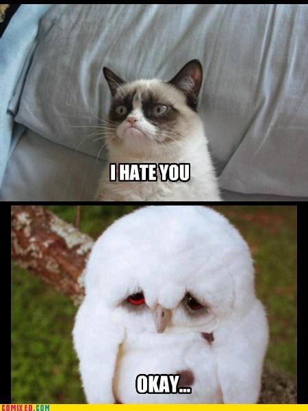 Sad,Owl,Okay
