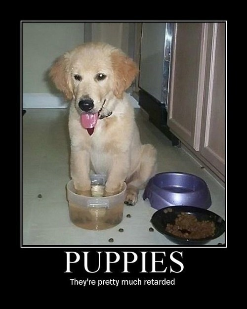 puppy,sit,idiots,food