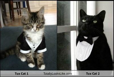 Tux Cat 1 Totally Looks Like Tux Cat 2