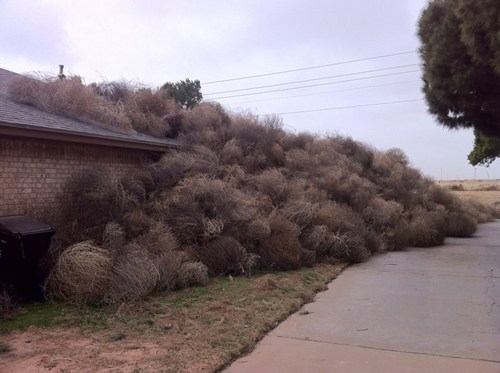 The Perils of Living With Tumbleweed