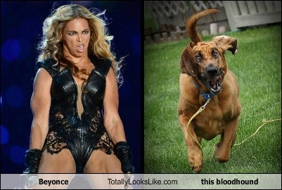Beyoncé Totally Looks Like This Bloodhound