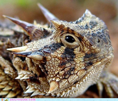 Creepicute: Horned Lizard