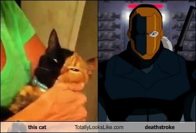 This Cat Totally Looks Like Deathstroke