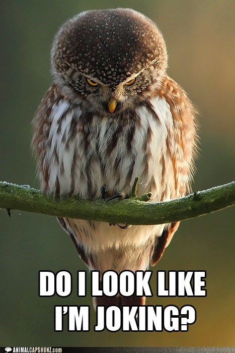 annoyed,joking,owls,angry