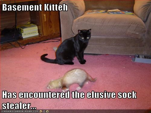 Basement Kitteh  Has encountered the elusive sock stealer...