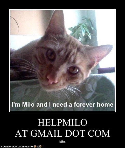 HELPMILO  AT GMAIL DOT COM