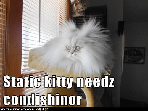 Static kitty needz condishinor