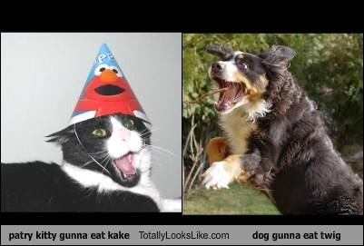 patry kitty gunna eat kake Totally Looks Like dog gunna eat twig